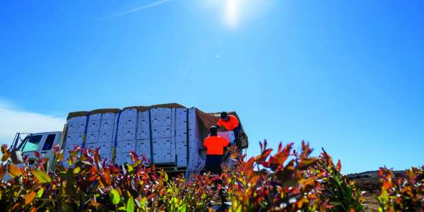 Forico completes 7 million seedling planting program