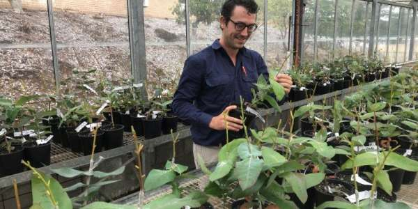 The Science Of Growing Better Trees
