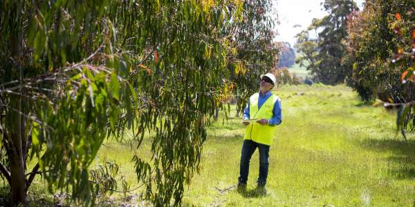 Australian First For Forico Plantations